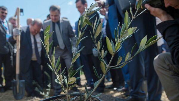 Jałta, sadzenie alei drzew na znak syryjsko-rosyjskiej przyjaźni - Sputnik Polska