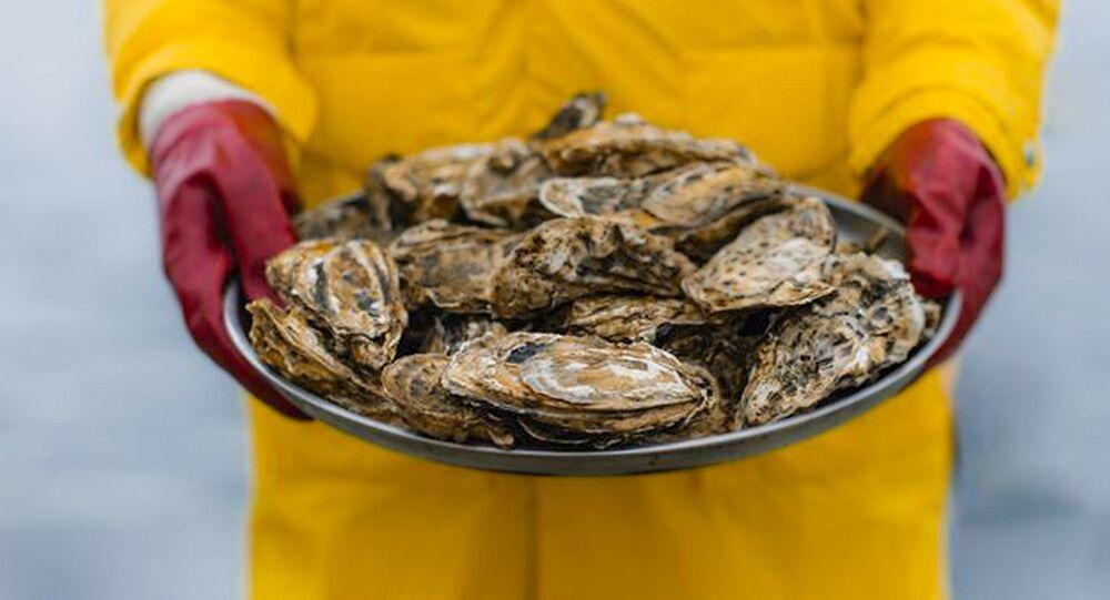 Ostrygi od firmy Krymskie Owoce Morza