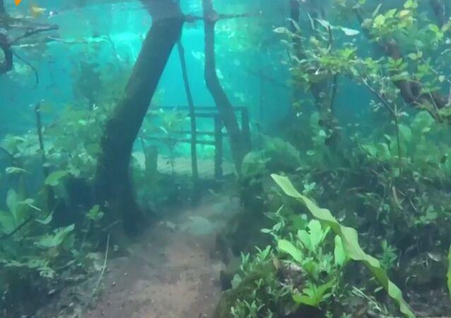 Las pod wodą... To chyba sen!
