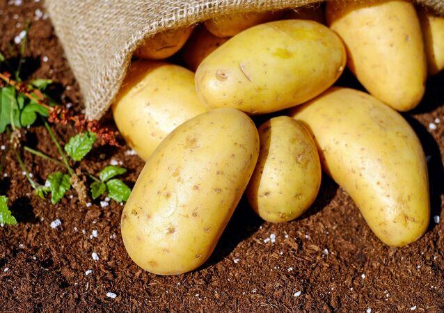 Bulwy ziemniaka