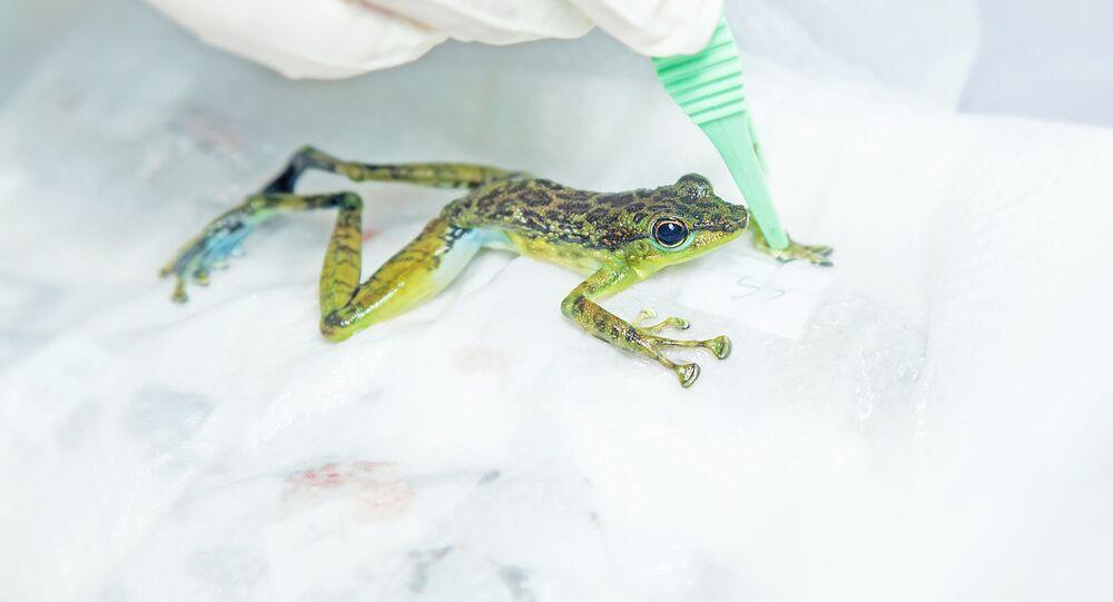 Żaba w laboratorium