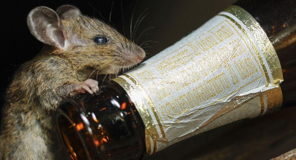Opracowano lekarstwo od alkoholizmu