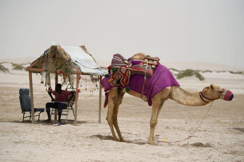 Poganiacz wielbłądów na pustyni Khor Al Adaid w Doha