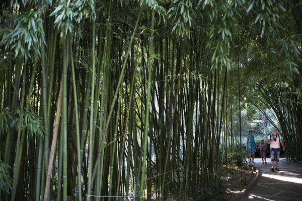 Urlopowicze w gaju bambusowym Nikitskiego ogrodzu botanicznego na Krymie - Sputnik Polska