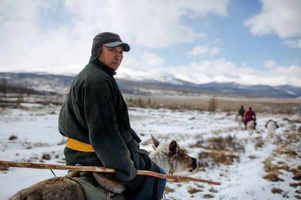 Miejscowy lekarz Davaavav Njamaa jedzie zaprzęgiem reniferów, by odwiedzić koczowników w lesie niedaleko wsi Cagaannuur, Huvsgel, Mongolia - Sputnik Polska