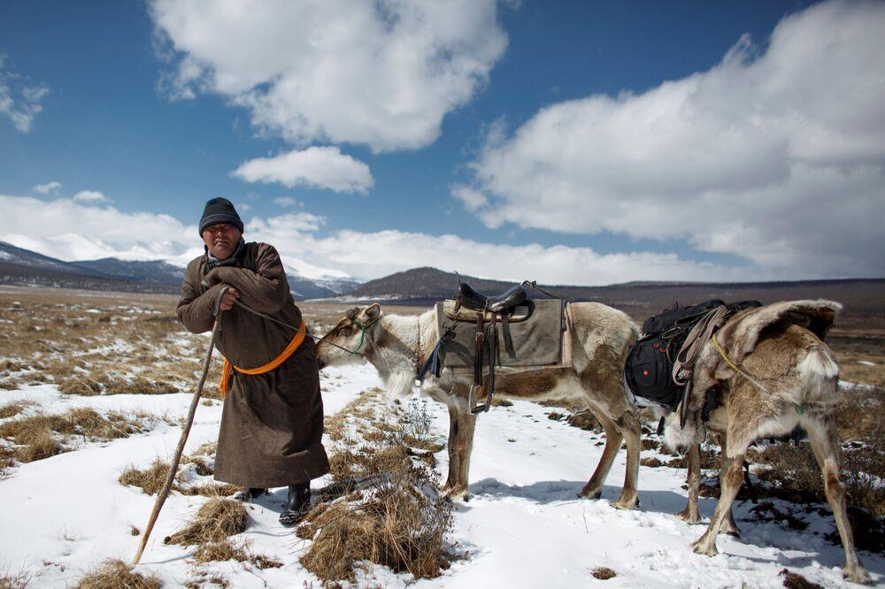 Łowca reniferów Erdenbat Chuluu ze swoimi zwierzętami w drodze do sąsiedniej wsi Cagaannuur, Huvsgel, Mongolia
