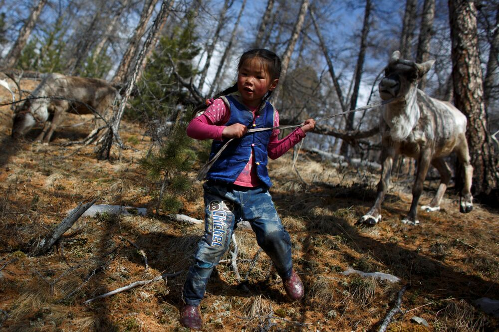 6-letnia mongolska dziewczynka prowadzi renifera na smyczy