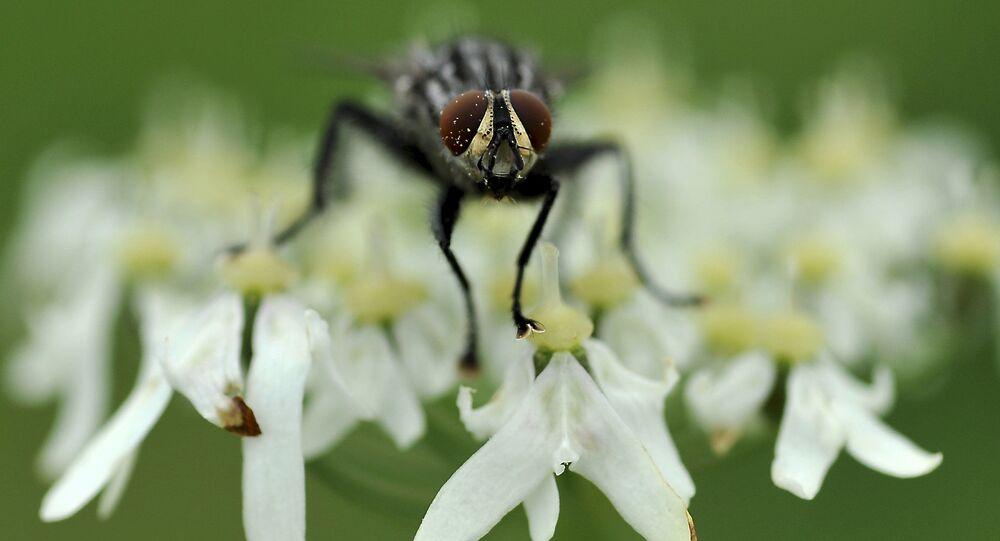Mucha na kwiatku