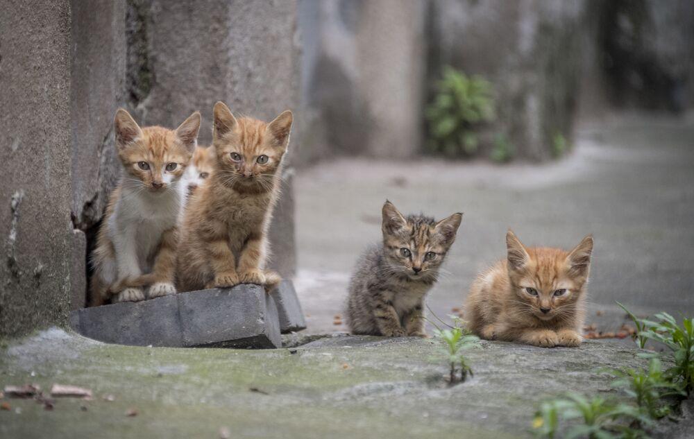Kocięta w Szanghaju, Chiny