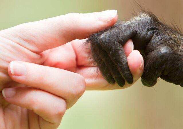 Kobieta trzyma małpkę za rękę