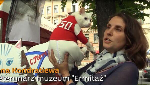 Ermitażowy kot Achilles - Sputnik Polska