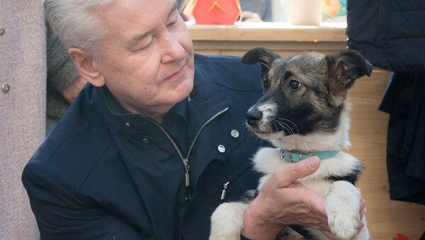 Mer Moskwy Siergiej Sobianin ze swoim psem - Sputnik Polska