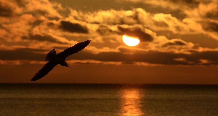 Ptak leci nad jeziorem Bajkał