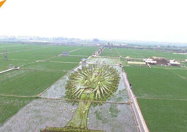 Chińscy rolnicy tworzą na polach ryżowych zadziwiające obrazy 3D
