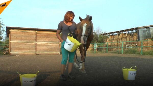 Koń, który przepowiada wyniki meczów - Sputnik Polska