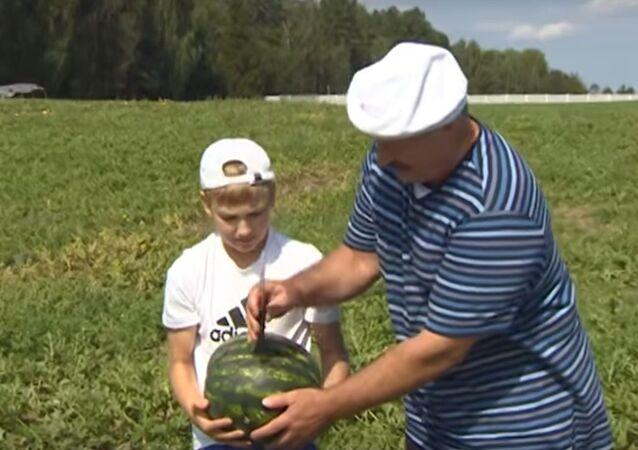 Alaksandr Łukaszenka zbiera plony