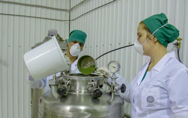 Technologiczny proces przygotowywania surowca w zakładzie Natura Siberica w Dmitrowie (obwód moskiewski) - Sputnik Polska