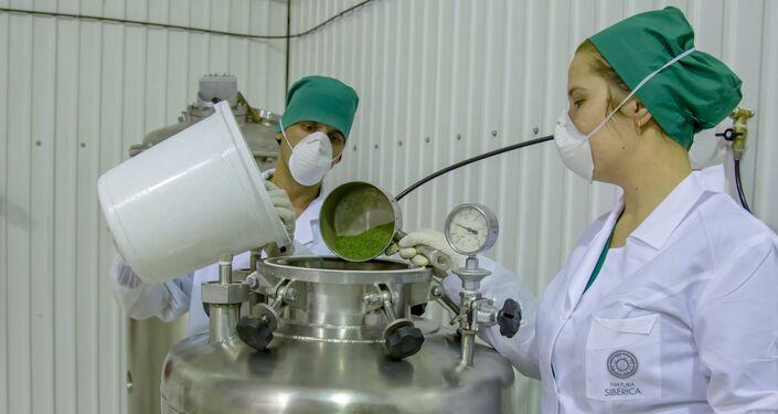 Technologiczny proces przygotowywania surowca w zakładzie Natura Siberica w Dmitrowie (obwód moskiewski)