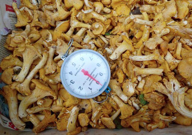 Od początku roku do Moskwy trafiło prawie 900 kg radioaktywnych grzybów i jagód