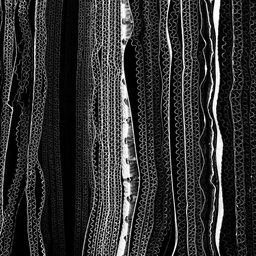 Fotograf Glenn Homann zajęła pierwsze miejsce w nominacji abstrakcja w konkursie fotograficznym iPhone Photography Awards 2018