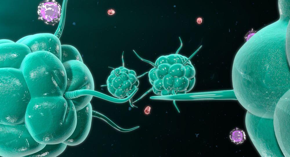 Komórki rakowa