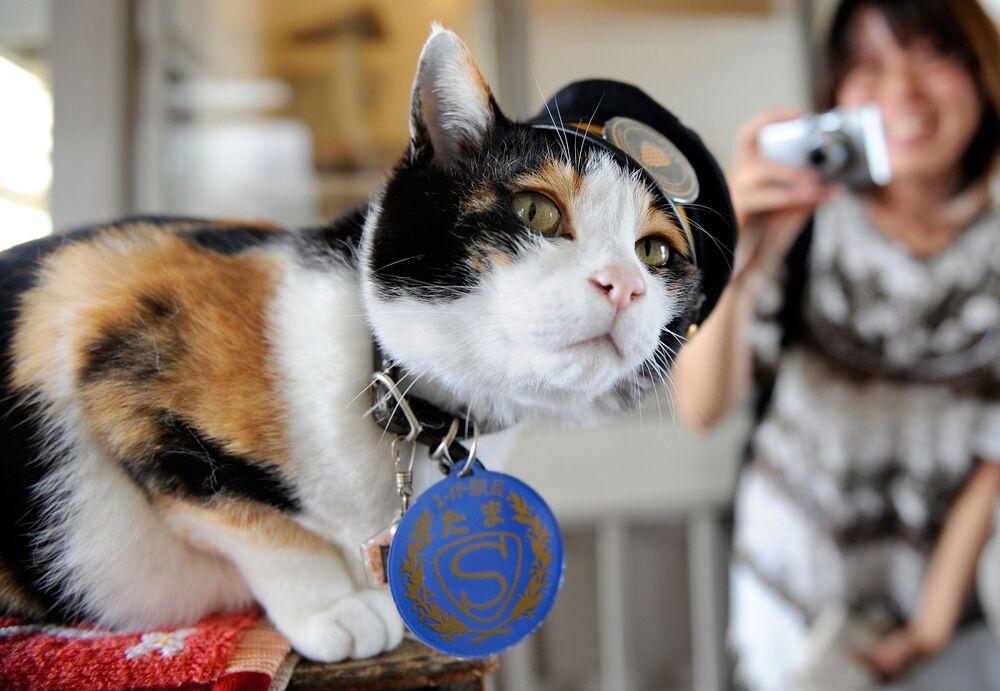 Kot Tama w japońskim mieście Kinokawa