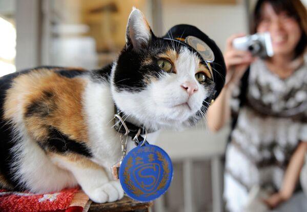 Kot Tama w japońskim mieście Kinokawa - Sputnik Polska