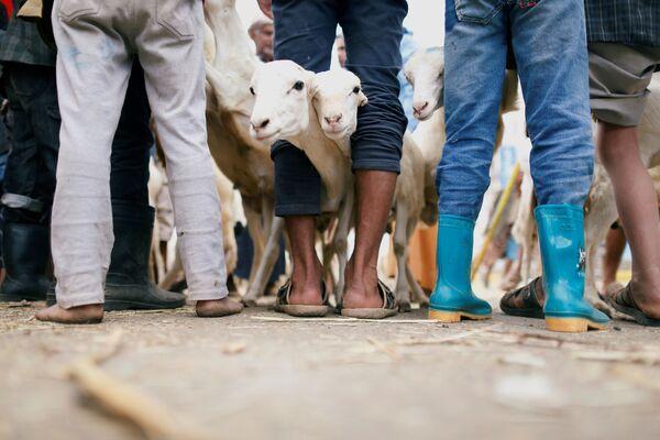 Sprzedarz zwierząt ofiarnych. Sana, Jemen - Sputnik Polska