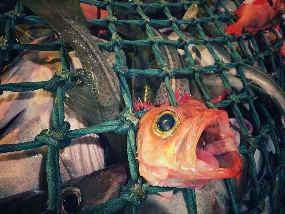 Sieć z rybami