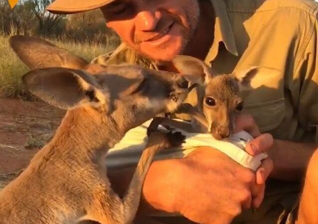 """Chris Barnes został """"mamą"""" kilkudziesięciu kangurów"""