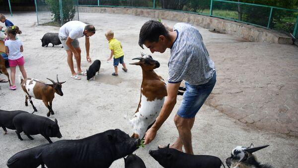Karmienie zwierząt - Sputnik Polska