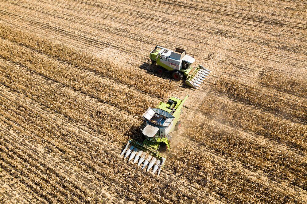 Zbiór kukurydzy w miejscowości Ladożskaja, Kraj Krasnodarski