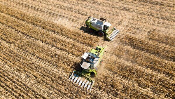 Zbiory kukurydzy ziarnowej w Kraju Krasnodarskim - Sputnik Polska
