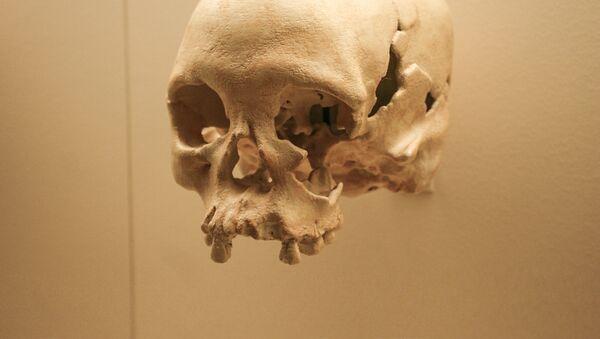 Kopia czaszki Luzie w Muzeum Historii Naturalnej w Waszyngtonie - Sputnik Polska