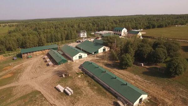 Rolnicy z Południowej Afryki chcą zamieszkać w Rosji - Sputnik Polska