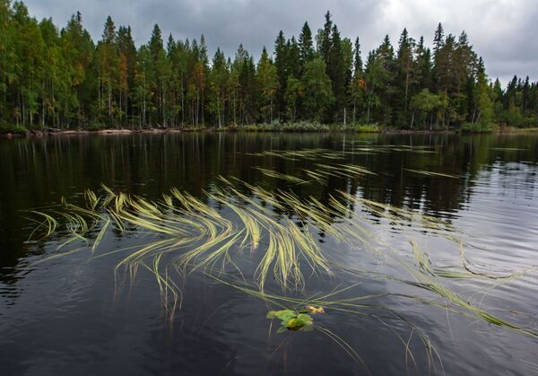 Jeziora leśne w rejonie suojarwskim w Karelii - Sputnik Polska