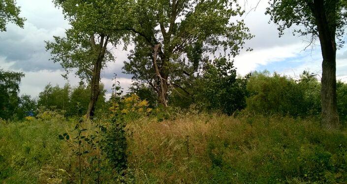 Wokół tych drzew mogą się znajdowac kolejne groby jeńców radzieckich, teren nie przebadany
