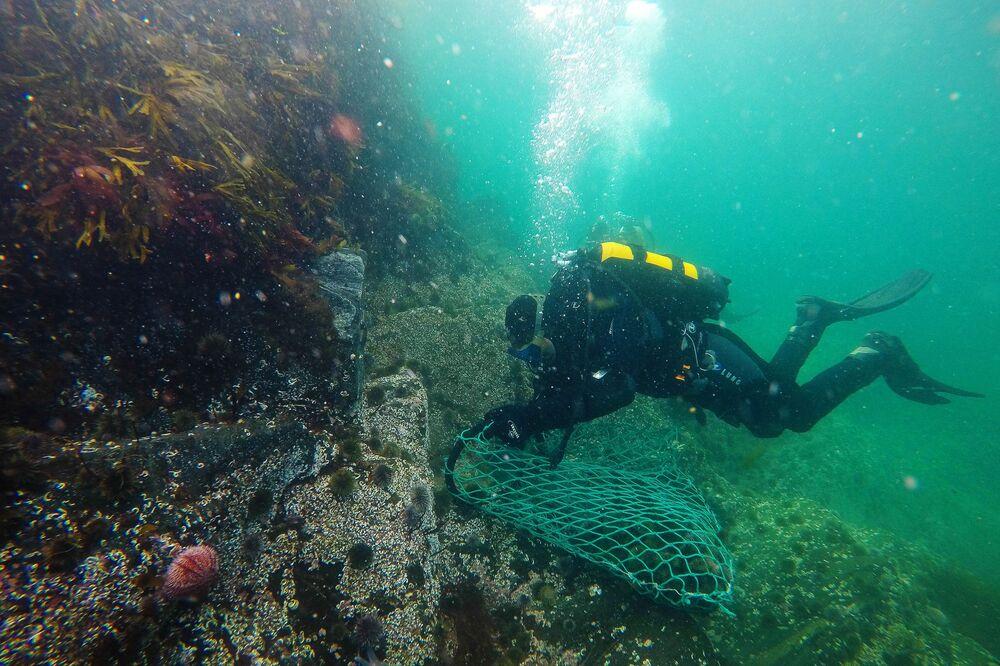 Wydobycie jeża morskiego w obwodzie murmańskim