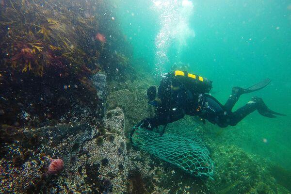 Wydobycie jeża morskiego w obwodzie murmańskim - Sputnik Polska