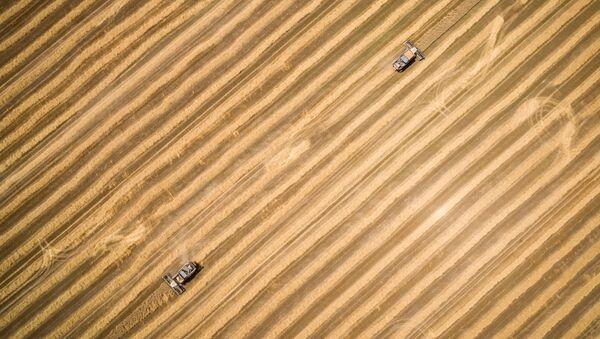 Sprzęt podczas żniwy pszenicy w Kraju Krasnodarskim - Sputnik Polska