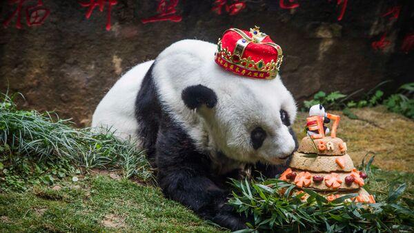 Panda z tortem urodzinowym - Sputnik Polska