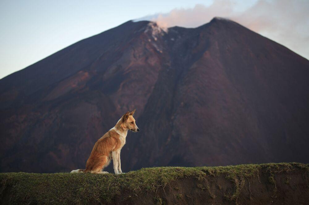 Wulkan Pacaya w Gwatemali