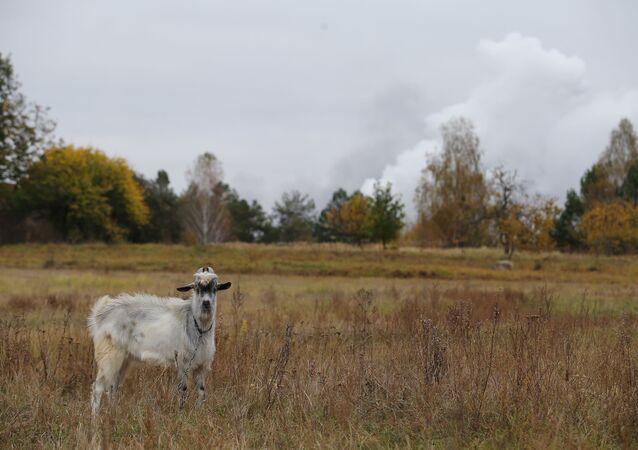 Dym od pożaru w magazynie amunicji w pobliżu miejscowości Icznia (obwód czernihowski)