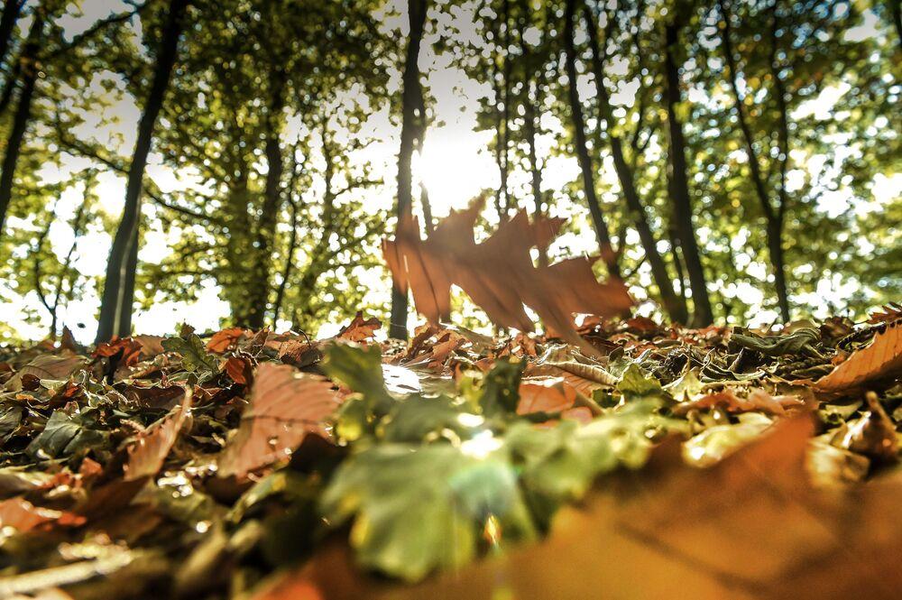 Jesień w Godewaersvelde, Francja