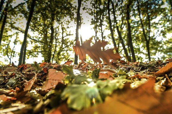 Jesień w Godewaersvelde, Francja - Sputnik Polska