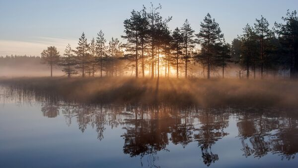Słońce świeci przez drzewa wczesnym porankiem w Republice Karelii - Sputnik Polska