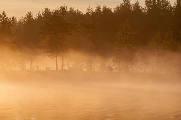 Słońce świeci przez drzewa wczesnym porankiem nad jeziorem w Republice Karelii - Sputnik Polska