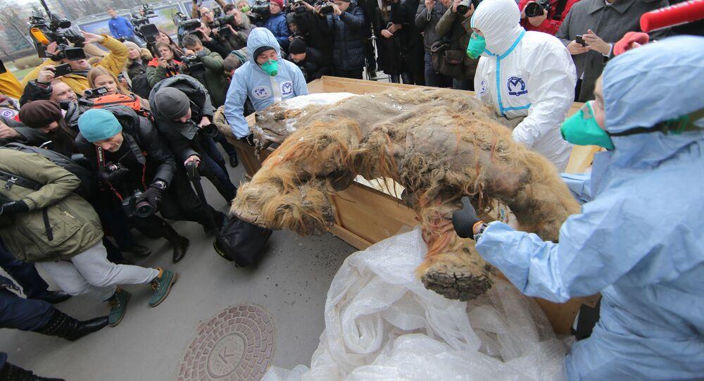 Jakucki mamut Juki