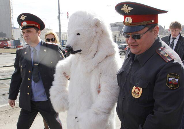 Policjanci aresztowali niedźwiedzia polarnego