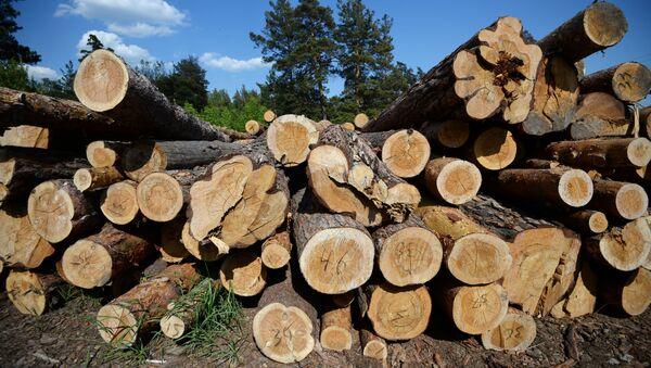 Drewno w obwodzie nowosybirskim - Sputnik Polska